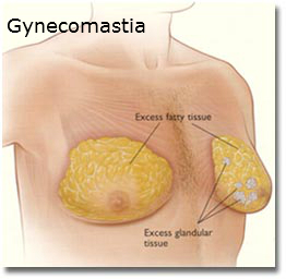 What causes breasts to grow