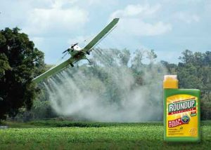 Roundup in oats spraying
